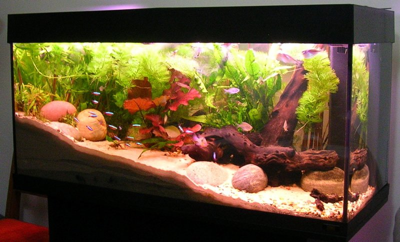 Home aquarium. How to move guide