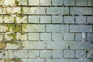 Mold brick wall