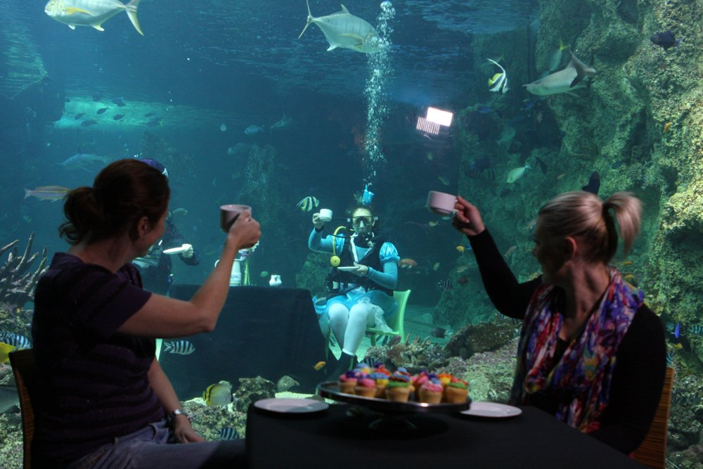 """<a href=""https://commons.wikimedia.org/wiki/File:Sydney_Aquarium_Mad_Hatters_Tea_Party_(7238137956).jpg#/media/File:Sydney_Aquarium_Mad_Hatters_Tea_Party_(7238137956).jpg"">Sydney Aquarium Mad Hatters Tea Party (7238137956)</a>"" by <a rel=""nofollow"" class=""external text"" href=""http://www.flickr.com/people/58820009@N05"">Eva Rinaldi</a> from Sydney Australia - <a rel=""nofollow"" class=""external text"" href=""http://www.flickr.com/photos/evarinaldiphotography/7238137956/"">Sydney Aquarium Mad Hatters Tea Party</a>Uploaded by <a href=""//commons.wikimedia.org/wiki/User:Russavia"" title=""User:Russavia"">russavia</a>. Licensed under <a title=""Creative Commons Attribution-Share Alike 2.0"" href=""http://creativecommons.org/licenses/by-sa/2.0"">CC BY-SA 2.0</a> via <a href=""//commons.wikimedia.org/wiki/"">Wikimedia Commons</a>."