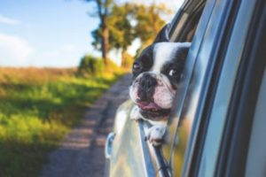 Prepare your pet for the journey ahead, especially when it comes to the long drive to that new Brooklyn home.