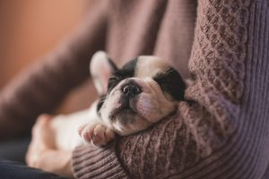 An adorable puppy snoozing gently in its owner's arms. That sweetheart is a forbidden item in a storage facility.