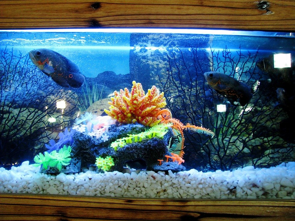 How to move your aquarium to Brooklyn