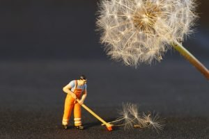 A man cleaning under a dandelion