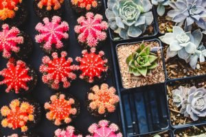 A bunch of colorful cacti. Potted plants are one of the forbidden items in a storage facility.