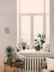 a nice set of plants near a window indicating it's a great a way to renovate your house on a budget