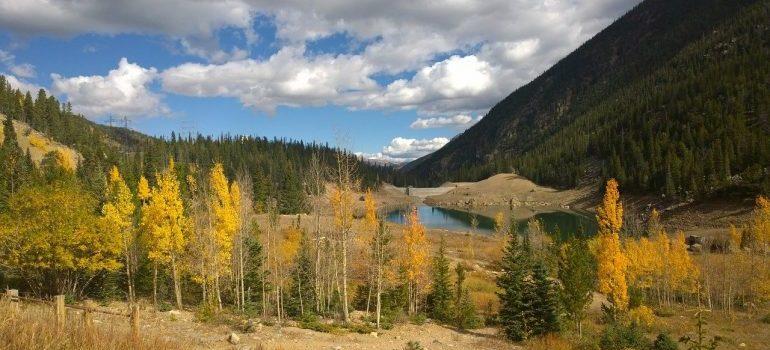 Denver aspens in Colorado.