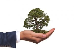 A hand holding a small tree.