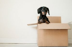 Moving box with a pet in it