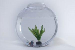 A fish bowl