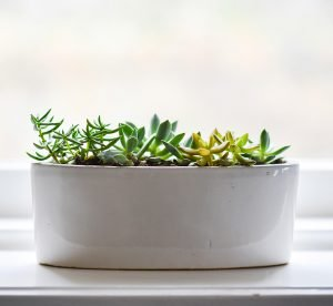 A small green plant in a white pot.