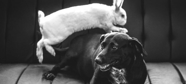 Dog and rabbit on a couch