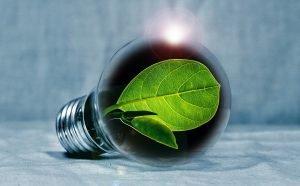 Bulb with leaf inside