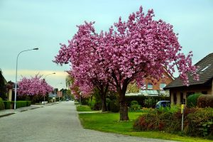 A peaceful neighborhood