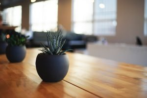 getting plants for your home office