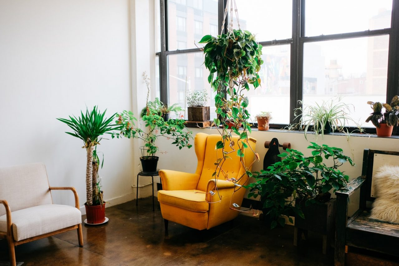 Best plants for small apartments