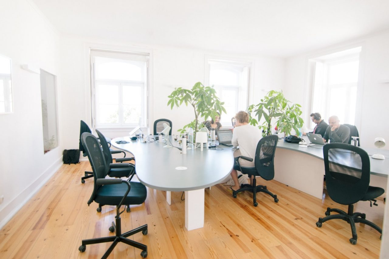 Tips for buying plants for your office