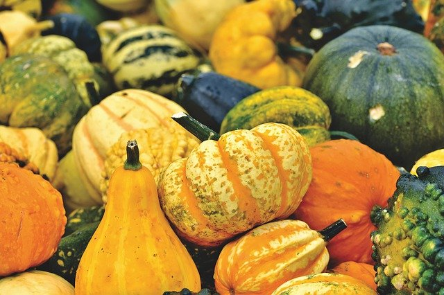 Top pumpkin patches in Brooklyn you shouldn't miss