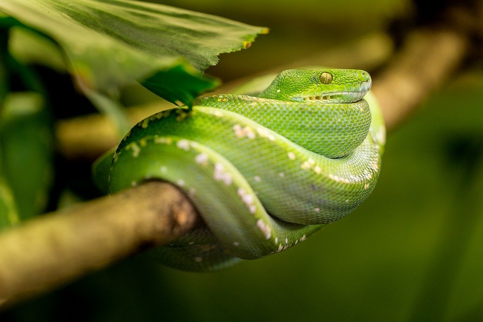 How to move your exotic pet to New York without breaking the law