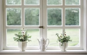 white window and houseplants